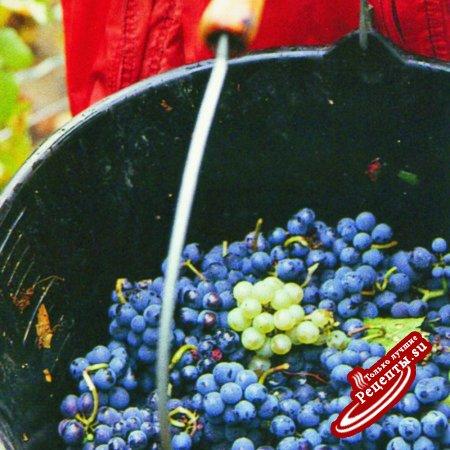 Испания. Изготовление испанского вина