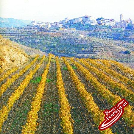Изготовление испанского вина. Виноградные поля каталонских виноделов