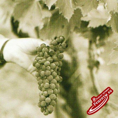 Изготовление испанского вина. Виноградная кисть