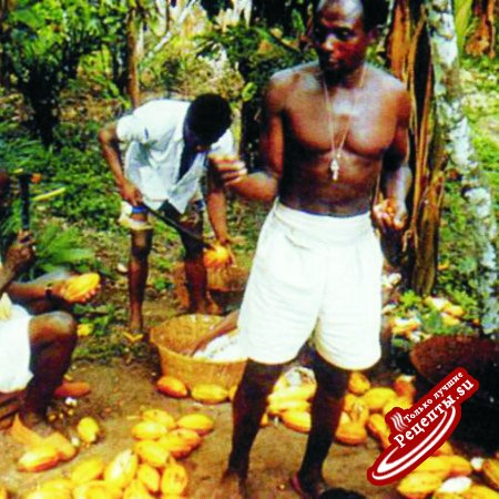Дерево из тропиков. Сборщик какао-бобов