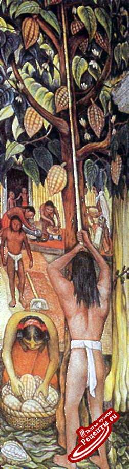 Дерево из тропиков. Фреска: процесс сбора какао